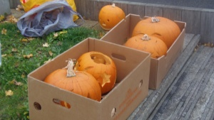 Pumpkin lanterns ready for lighting